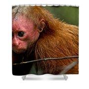Bald Uakari Monkey Shower Curtain