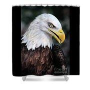 Baldeagle-6884 Shower Curtain
