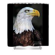 Baldeagle-6903 Shower Curtain