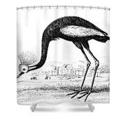 Balearic Crane Shower Curtain