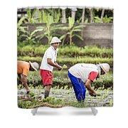 Bali Farming Shower Curtain