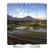 Bali Terrace Rice Field Shower Curtain