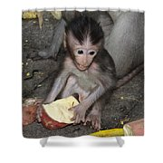 Balinese Baby Monkey Eating Shower Curtain