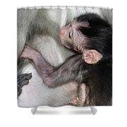 Balinese Baby Monkey Feeding Shower Curtain