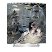 Balinese Monkey Family Shower Curtain