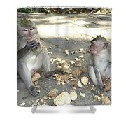 Balinese Monkeys Eating Shower Curtain