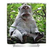 Balinese Serious Monkey Shower Curtain