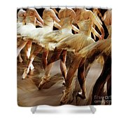 Ballet Dancers 05 Shower Curtain