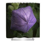 Balloon Flower Shower Curtain
