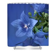 Balloon Flowers - Blooms And Buds Shower Curtain