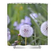 Balls Of Seed Shower Curtain