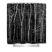 Ballysallagh Forest Mono Shower Curtain