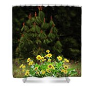 Balsamroot And Evergreen Shower Curtain