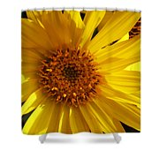 Balsamroot Flower Shower Curtain