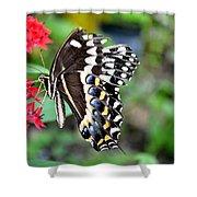 Baltimore Checker Spot Butterfly Shower Curtain