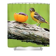 Baltimore Oriole Having Breakfast This Morning Shower Curtain