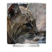 Bama Bobcat Shower Curtain