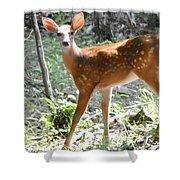 Bambi1 Shower Curtain