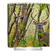 Bambi's Father Shower Curtain