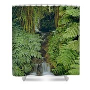 100837-bamboo And Ferns Creek  Shower Curtain