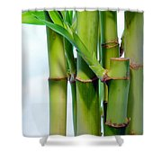Bamboo And Sky Shower Curtain
