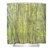 Bamboo In San Diego Zoo Shower Curtain