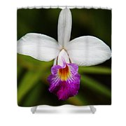 Bamboo Orchid  Shower Curtain