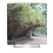 Bamboo Overhang Path  Shower Curtain