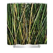 Bamboo Shoots  Shower Curtain