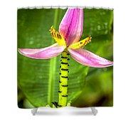 Banana Flower 2 Shower Curtain