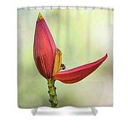 Banana Flower Bud  Shower Curtain