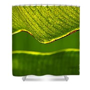 Banana Leaf Lines Shower Curtain