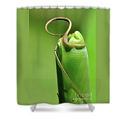 Banana Palm Frond Ready To Unfurl Shower Curtain