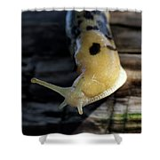 Banana Slug Closeup Shower Curtain