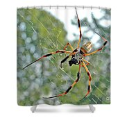 Banana Spider Shower Curtain