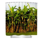 Banana Trees Shower Curtain