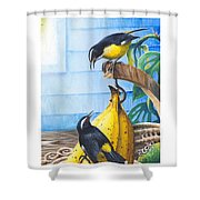 Bananaquits And Bananas Shower Curtain