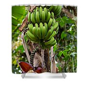 Bananas In Africa Shower Curtain