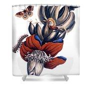 Bananas (musa Paradisiaca): Shower Curtain