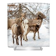 Band Of Big Horns Shower Curtain