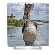 Banded Beauty Shower Curtain
