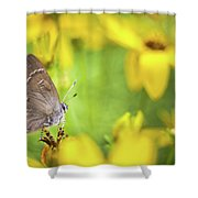 Banded Hairstreak On Coreopsis Shower Curtain