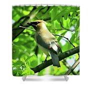 Bandit Bird Shower Curtain