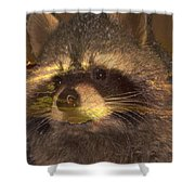 Bandit Sunset Shower Curtain