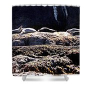 Bandon 11 Shower Curtain