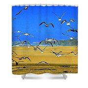 Bandon Gulls Shower Curtain