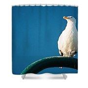 Bandon Seagull. Shower Curtain