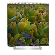 Bank Of Succulents Shower Curtain