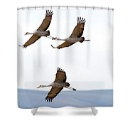 Bank Right Shower Curtain