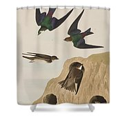 Bank Swallows Shower Curtain